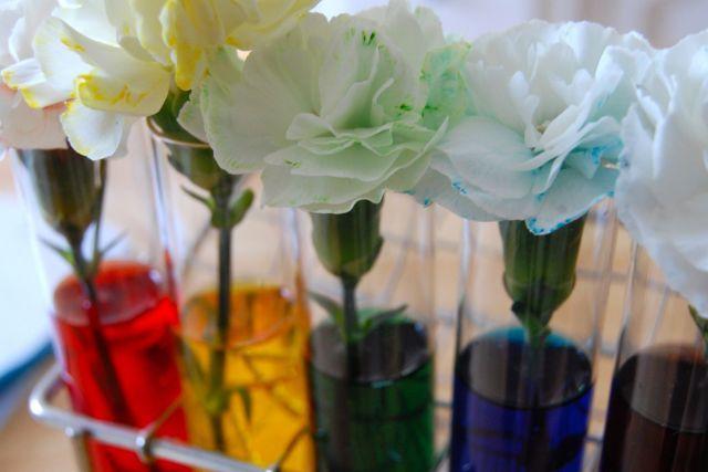 Coloration de fleurs