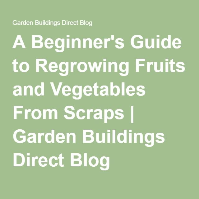 A Beginner's Guide to Regrowing Fruits and Vegetables From Scraps   Garden Buildings Direct Blog