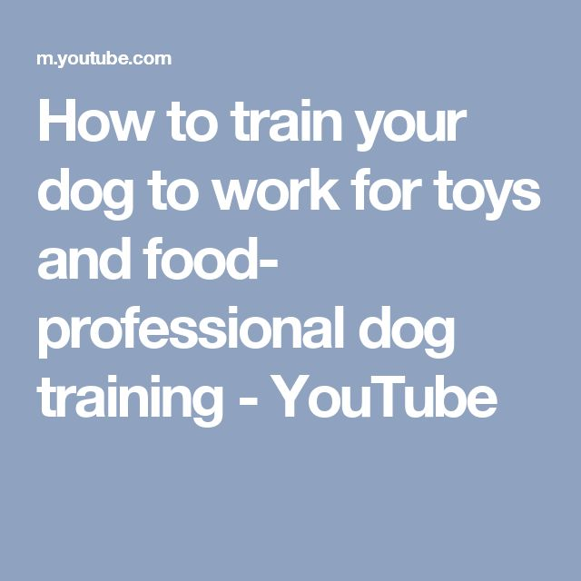 How to train your dog to work for toys and food- professional dog training - YouTube