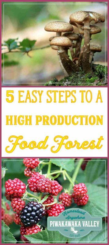 growing a permaculture food forest how to create a garden