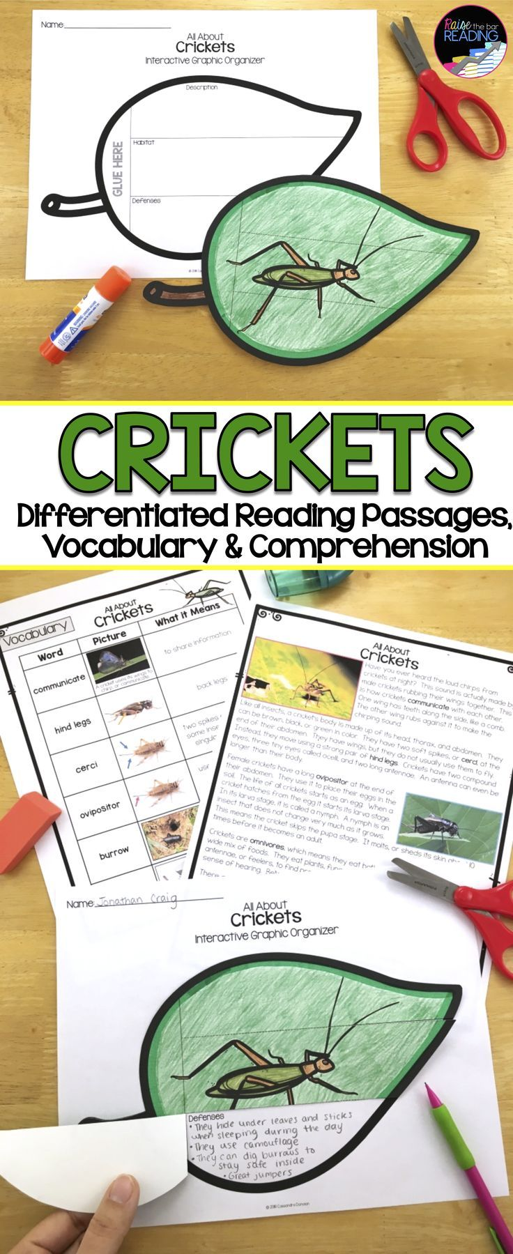 Crickets Differentiated Reading Passages Grades 2 5 Perfect For Your Insects Unit Gu Differentiated Reading Passages Differentiated Reading Reading Passages [ 1799 x 736 Pixel ]