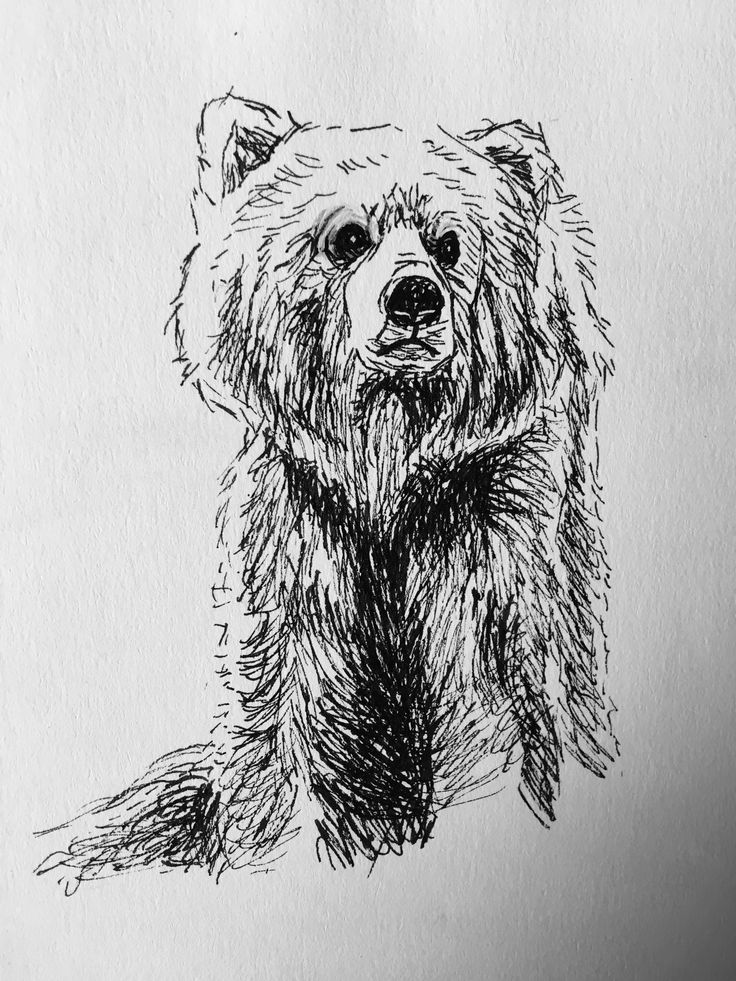 Bear sketch from photo reference (don't really do other than photo referencing)