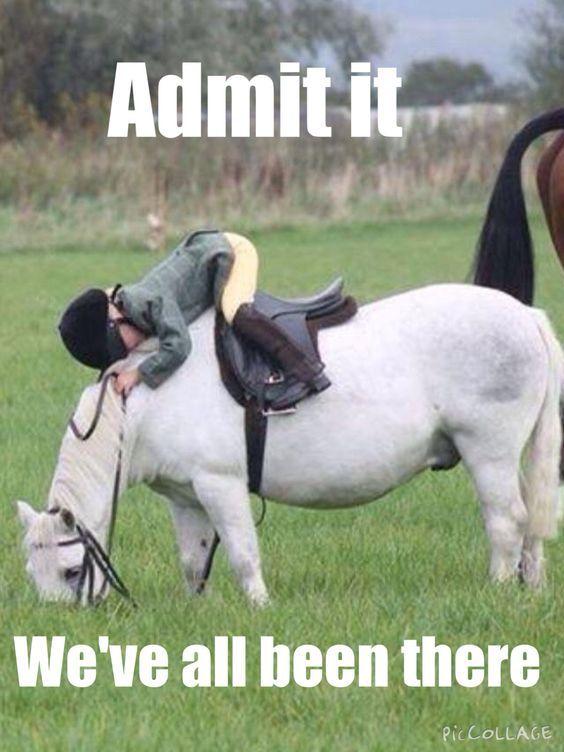 21 best Horse Humor images on Pinterest | Funny horses ...