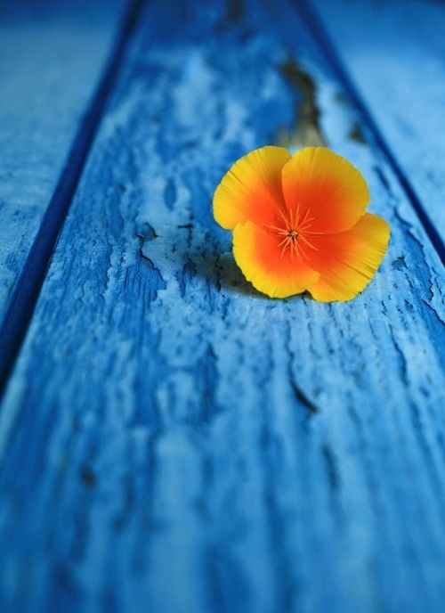 I chose this picture to represent the complementary colours because it contains orange colour & blue colour. The flower is orange & the wood/background is blue. P.S If the outside of the flower is to yellow in your opinion, please disregard it.