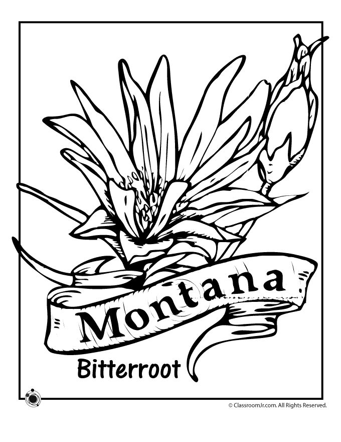 State Flower Coloring Pages Montana Page Clroom Jr