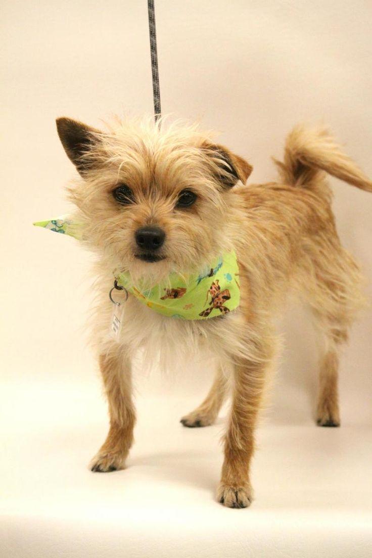 Dog Rescue Tulsa