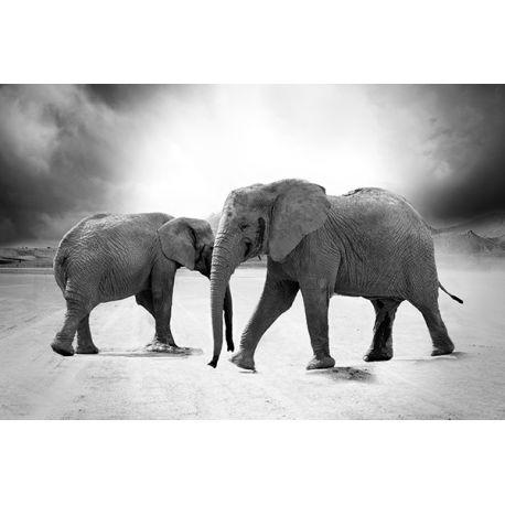 Obraz na płótnie - Dzikie słonie - dostępny w rozmiarach 150x100, 120x80, 90x60, 70x45, 60x40 i 40x26 cm #fedkolor #obraz #na #płótnie #ze #zdjęcia #słonie #słoń #Afryka #dzika #natura #przyroda #sawanna #czarnobiałe #blackwhite #obrazzezdjęcia #obraznapłótnie #zdjęcianapłótnie #wydruknapłótnie #diy #ozdoby #dekoracja