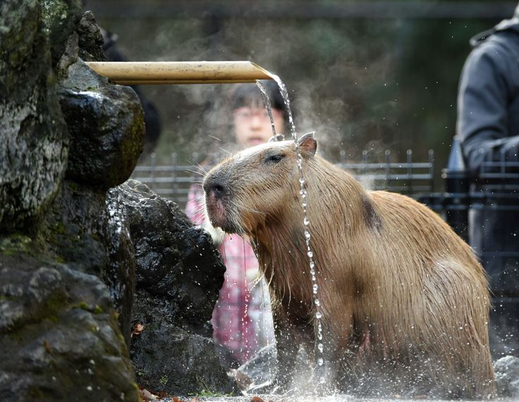 25 animals who are handling the heat better than you