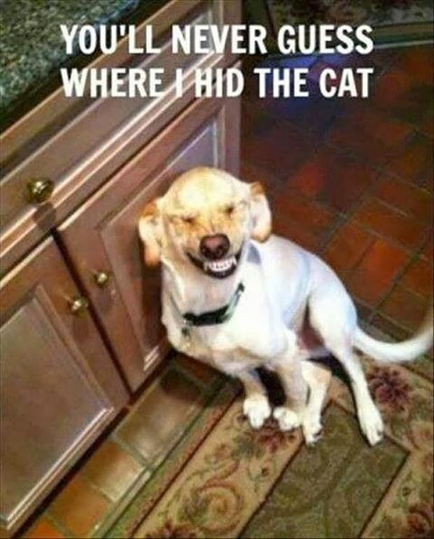 Ha ha.... My dog smiles like this when she knows she's in trouble.