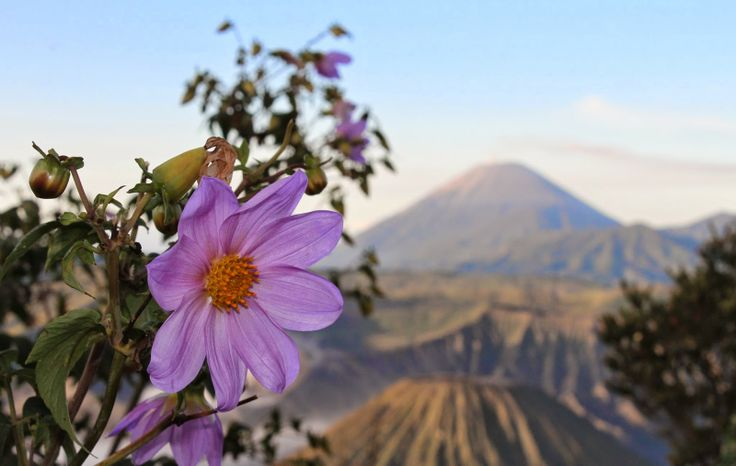 Mount Bromo, East Java, Indonesia, volcano #VirtualTourist