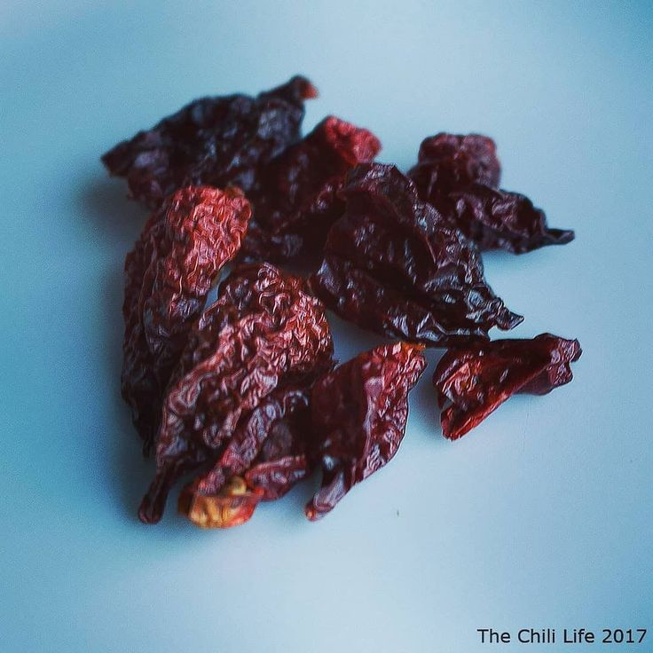 Dried some Apocalypse Scorpion Chocolate in the oven over the night. I think I'll try to make my own chili salt. What else can I do with these  hot dried peppers?! #thechililife #capsicum