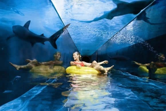 Scary pools filed with sharks Rich and loved this slide at the atlantis