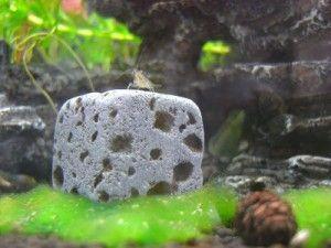 Nano Aquarium kaufen mit unserem Ratgeber und dem Einrichtungsfaden