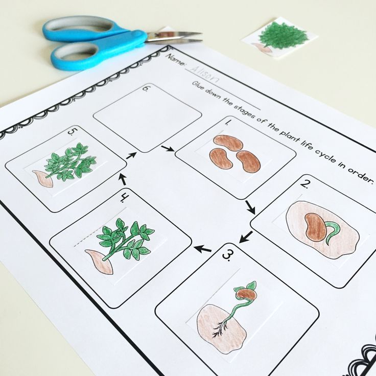 Plant life cycle sequencing activity!! Comes from a complete unit on the parts of a plant and the plant life cycle for preschool, Kindergarten, and first grade. $