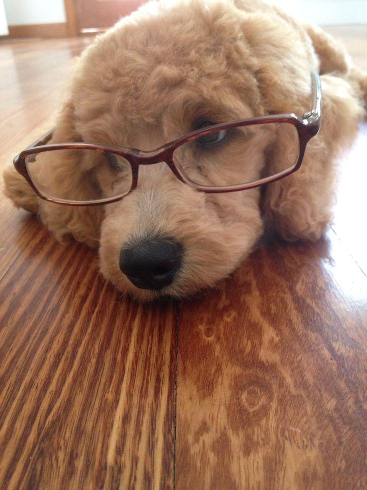 Cute in glasses!