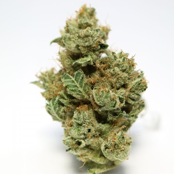 MK Ultra AAAA - MK Ultra is renowned for its 'hypnotic' effects that are fast-acting and best used when strong medication is desired. As evidenced by its collection of awards, this indica is one of the strongest in the world. It might be best for a day when not getting off the couch would be fine.