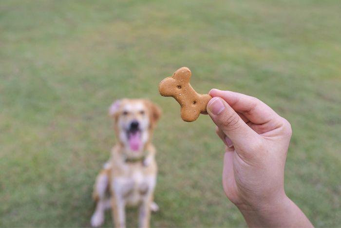 """El acostarse es uno de los comandos más difícil para los perros para aprender, pero es muy útil. Los perros que entienden """"abajo"""" son mucho más bienvenidos en los cafés y otros lugares públicos, y mucho más agradable tener cerca de la mesa de la cena. """"Abajo"""" también es un …"""