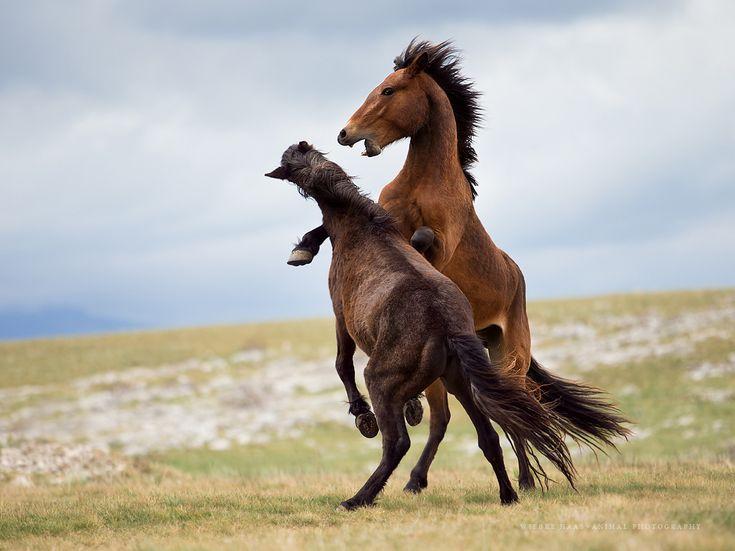 Wild Things - Gdzie mieszkają dzikie konie żyją - Wiebke HAAS