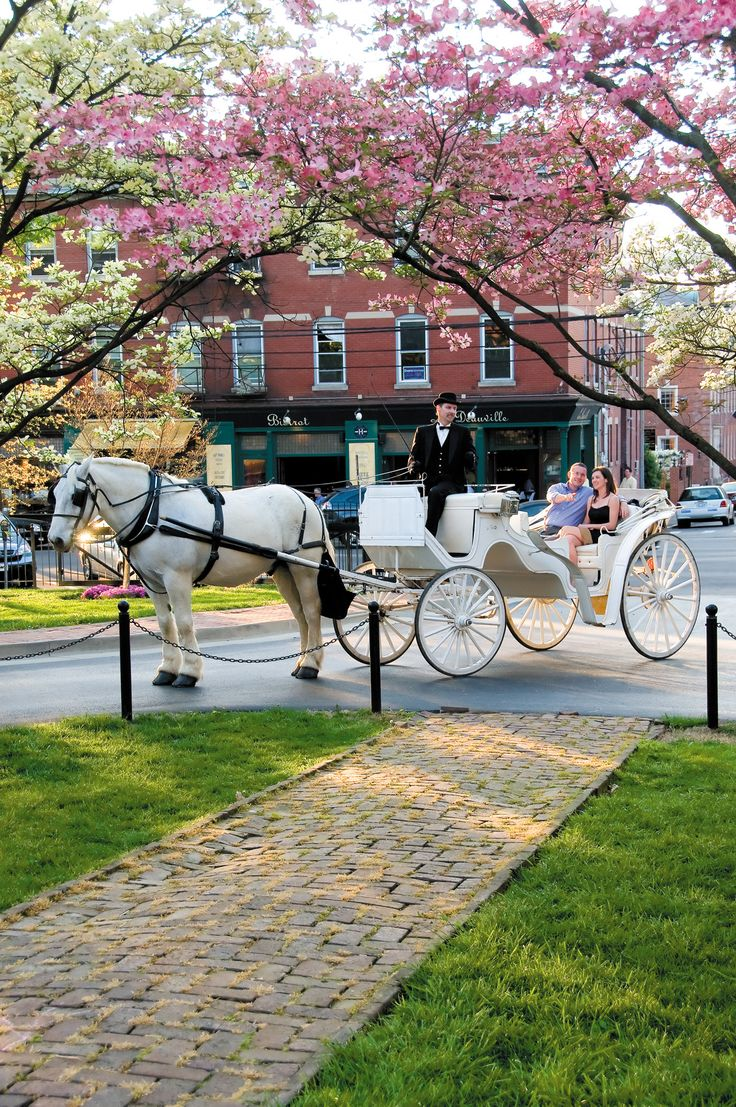 One of the horse and carriages I used for my Lexington KY wedding. (Oh well.... Meaning, I'm single now ;))