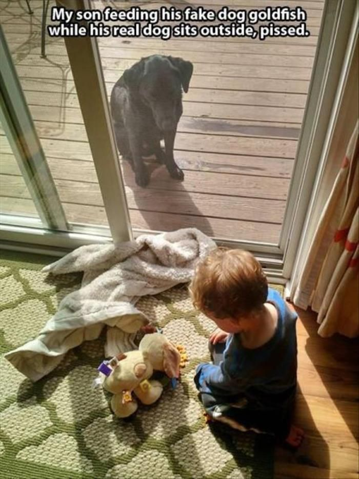 Hopefully they gave the dog some goldfish after this torture!  Funny Pictures Of The Day – 46 Pics