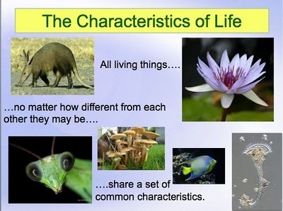 8 Best Characteristics Of Life Images On Pinterest Life Science
