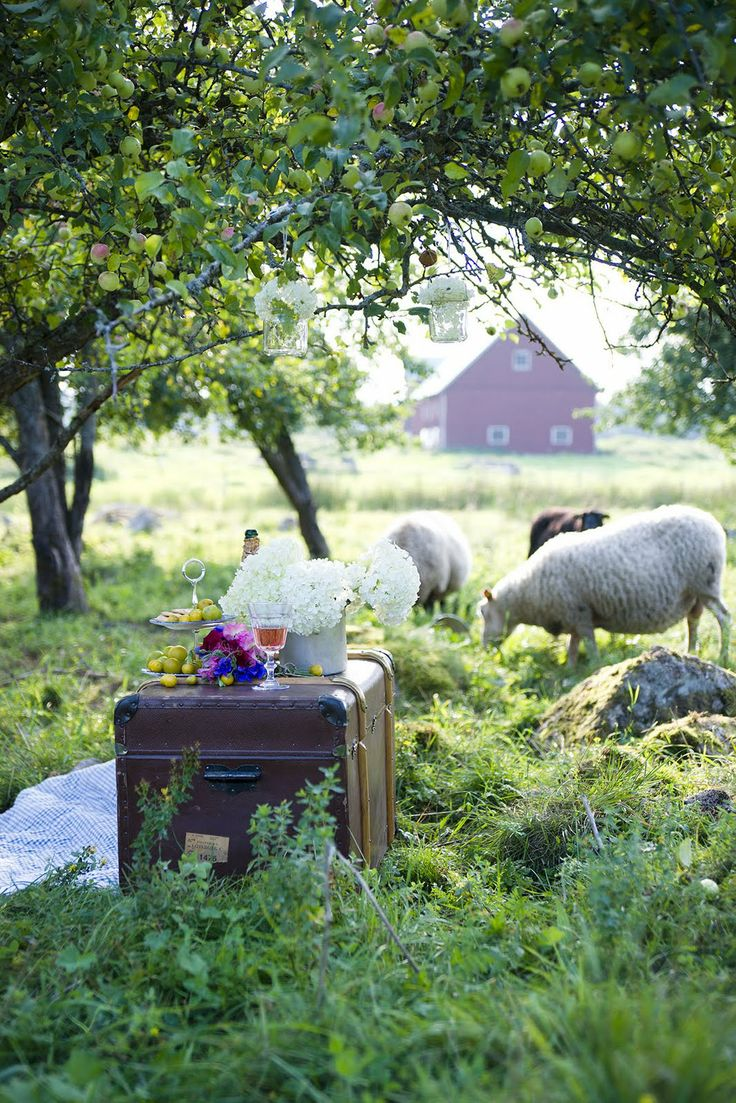 Picnic in the Apple Orchard. All I need now is an orchard, grass, sheep and a picnic basket!