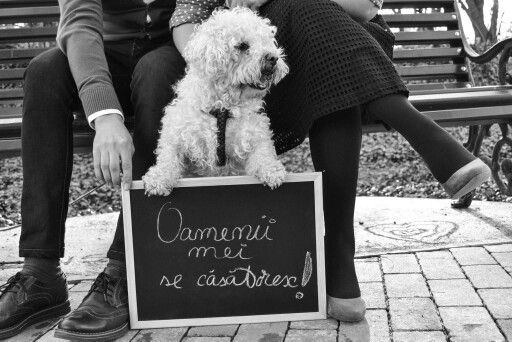 Save the date, dog with attitude! My humans are getting married! - romanian