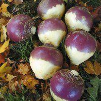Image of York Turnip