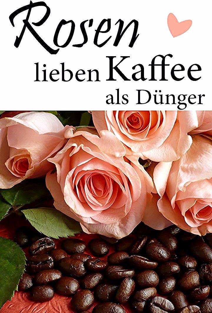 Kaffeesatz Als Rosendunger Planting Flowers Patio Plants Plants