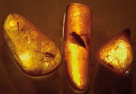 L'AMBRE. Pour soulager les poussées dentaires de nos petits L'ambre est à la source de bien des légendes. Selon la mythologie grecque, ce sont les larmes des filles de Zeus, pleurant leur frère noyé et transformées en arbre par leur père. Ces larmes tombant dans l'eau devinrent de l'ambre | Rebelle-Santé