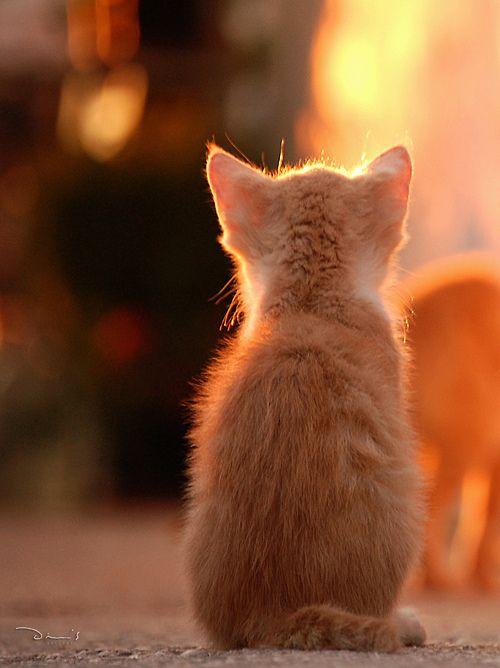 mel-cat: Cat, Folegandros (Greece) (por Dimitri D)