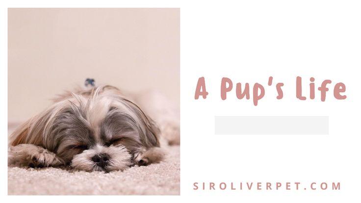 A Pup's Life