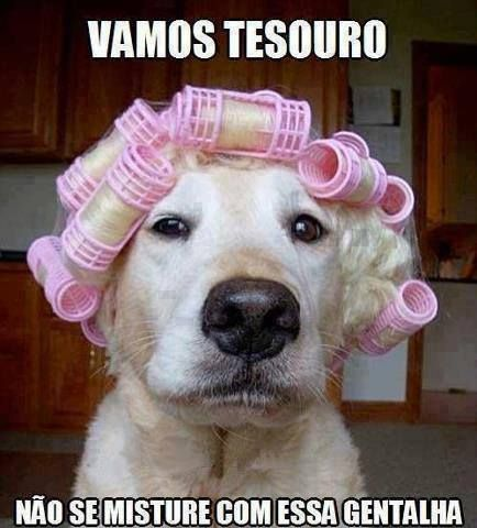 10 best cachorro de peruca images on pinterest funny animals going to walmart funny quotes memes quote dogs meme funny quotes humor funny animals fandeluxe Images