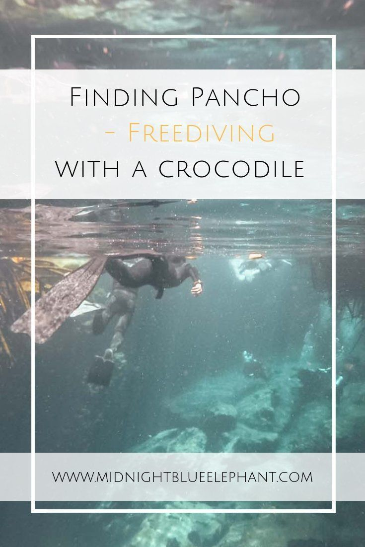 Who wants to dive with a crocodile? At Casa Cenote in Tulum, you can hang out wi… – ✈ Favorite Places || Flight Fishing ✈