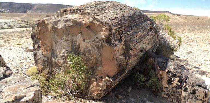 Bosques Petrificados … testimonio natural con más de 150 millones de años