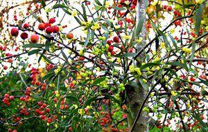 10 gode råd til haven i december