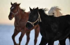 zuma's rescue ranch.  a good place and a good cause to volunteer.: Ponies, Horses Rescue, Volunteers, Zuma Rescue, Places, Rescue Ranch, Hors Rescue, Lifestylin, The Roller Coasters