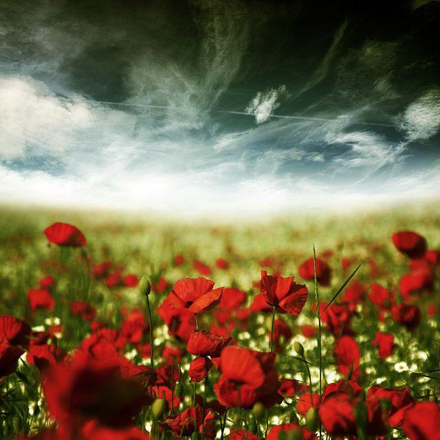 White, poppy red, yellowy green, against a crazy dark slate grey