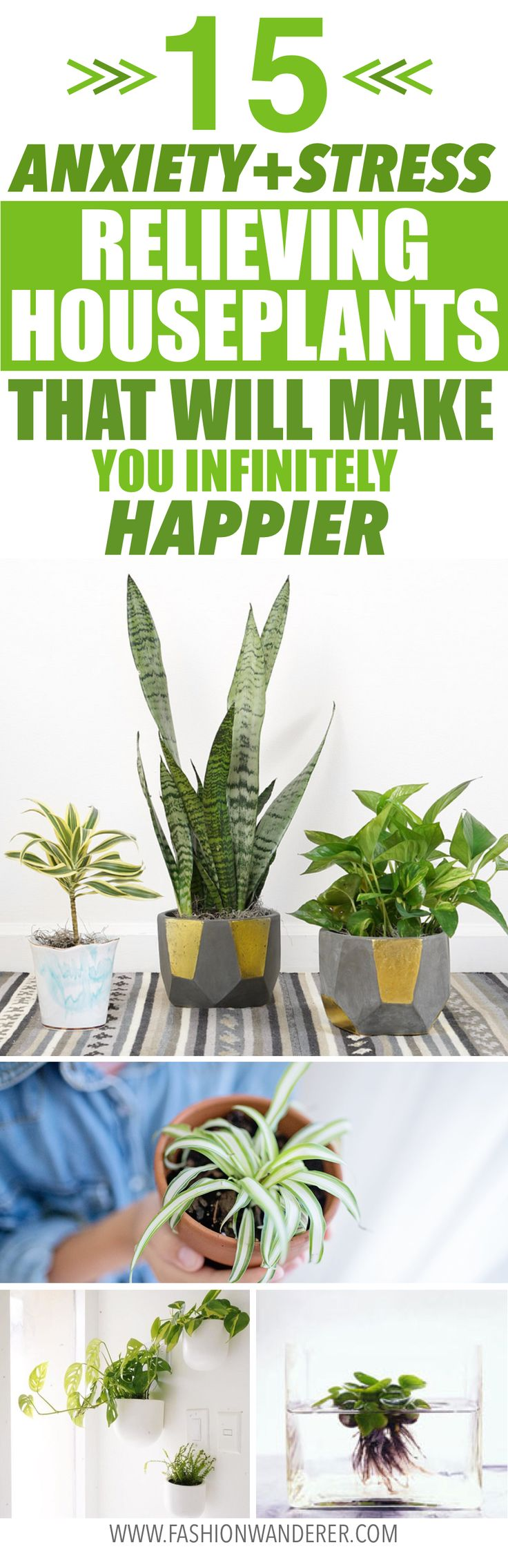 15 Anxiety and Stress Relieving Houseplants That Will Make You Infinitely Happier