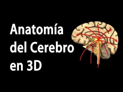 Anatomía del Cerebro en 3D, Animación. Alila Medical Media Español. - YouTube