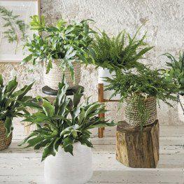 25 beste idee n over kamerplanten op pinterest for Grote planten voor binnen