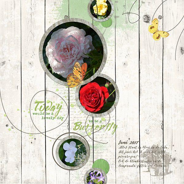 Foto's van mijn tuintje en vooral de prachtige rozen. Gemaakt met mijn nieuwe template-serie: circles http://winkel.digiscrap.nl/Circles-templates/ En de kit Bees&Butterflies http://winkel.digiscrap.nl/Bees-and-Butterflies-Full-Kit/