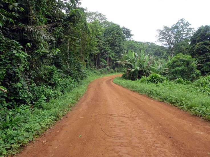 This dirt road on Principe Island, São Tomé and Príncipe, cuts through the rainforest on its way from Bon Bon Island Resort to the airport.