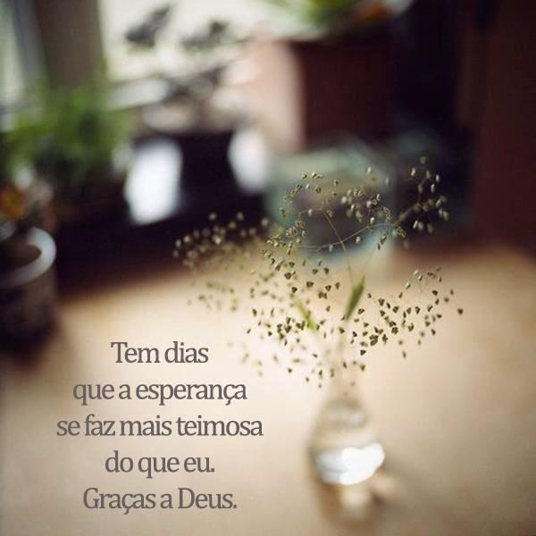 TEM DIAS QUE A ESPERANÇA SE FAZ MAIS TEIMOSA DO QUE EU. GRAÇAS A DEUS. #frases #words
