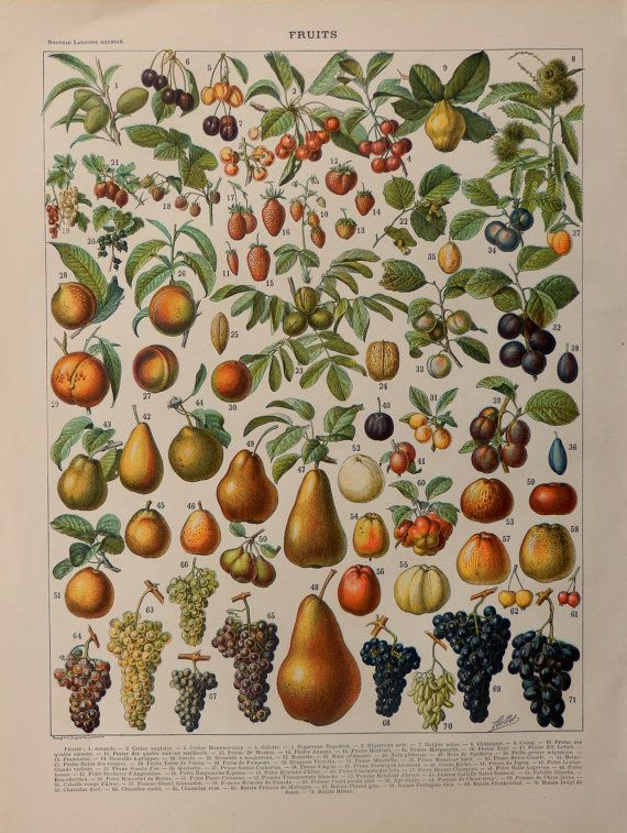 Antique FRUITS print.1898 Chromolithograph by CastafioreOldPrints