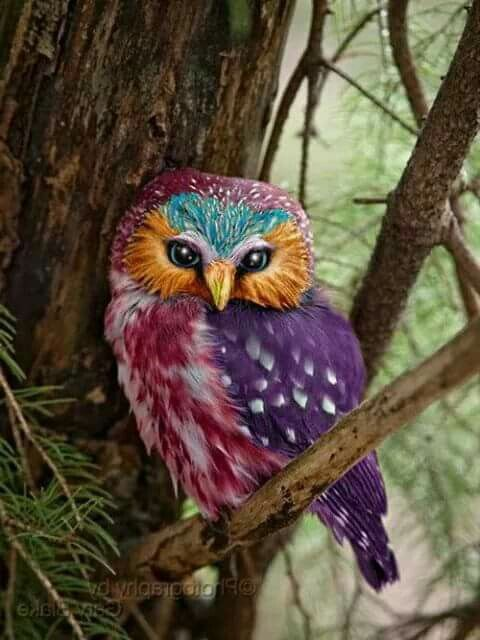 Colourful owl - It's clearly Photoshopped, but it's so pretty!