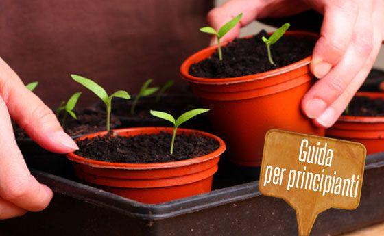 Orto in vaso: come iniziare? Tutti i consigli per coltivare un orto sul vostro balcone | Giardinieri in affitto