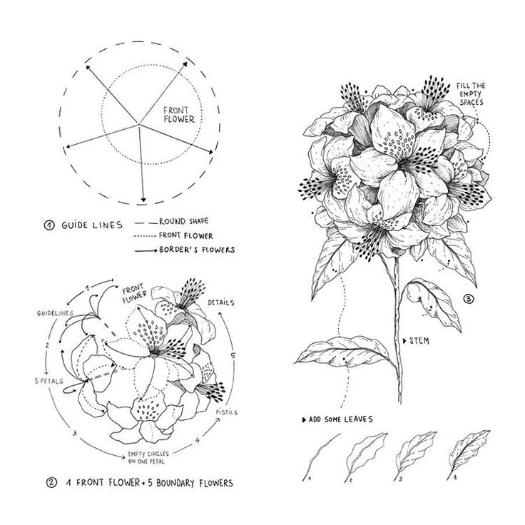 Pin by Ruth O'Hara on How to Draw / Paint Flower drawing