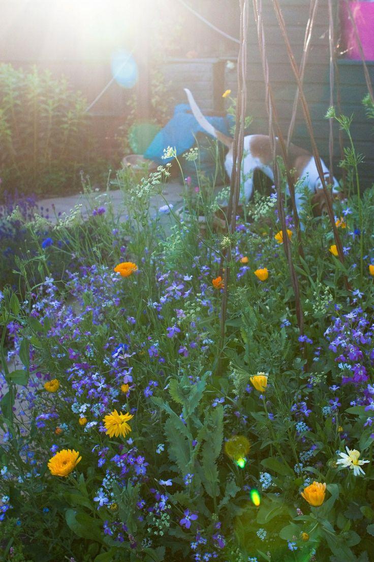 Wild flowers abandonment. original photo Sue Lacey
