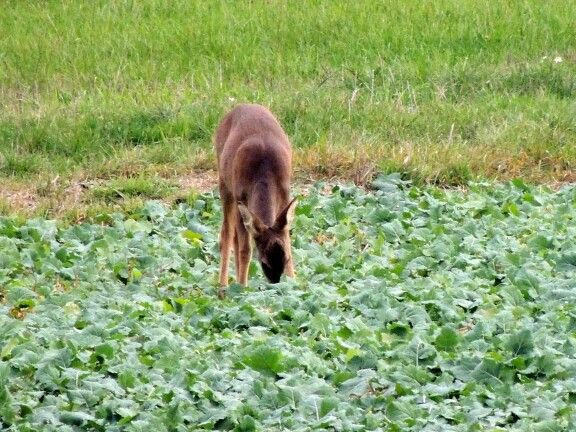 #Deer #Shoot :D